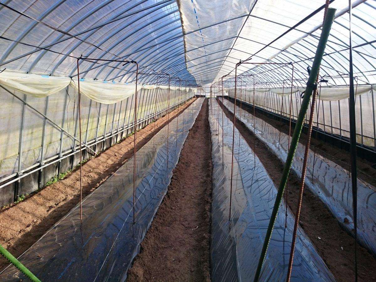 圃場の準備開始