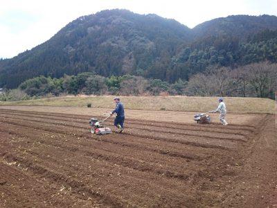 露地野菜の準備開始